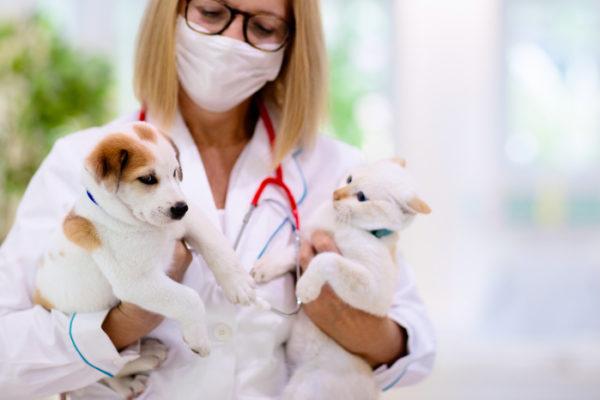Veterinary Practice Sales - Sell Side Advisory